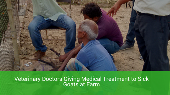 Medical Treatment by Veterinary Doctors on Centre For Livestock Farm